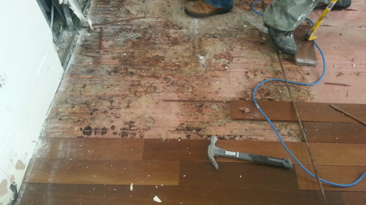 Bleach is an effective biocide to eliminate mold Bleach is only effective on hard non-porous surfaces. Using bleach on wood, cement, sheetrock or plaster is ineffective.