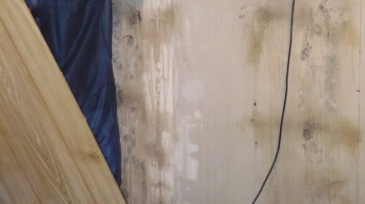 Mildew is a common issue for many homes and businesses on Long Island, New York. Get a professional team to help with the removal of mold and mildew today!